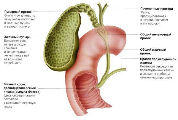 Как болит желчный пузырь, симптомы у женщин