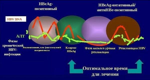 течение гепатита
